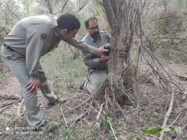 خبرنگاران پایش گوزن های زرد پارک ملی دز شروع شد